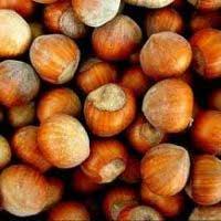 sadnice lešnika - lesnik rimski