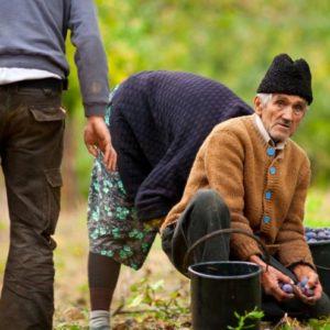 Srpska poljoprivreda